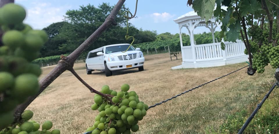 Best Long island Wine Tours From NYC